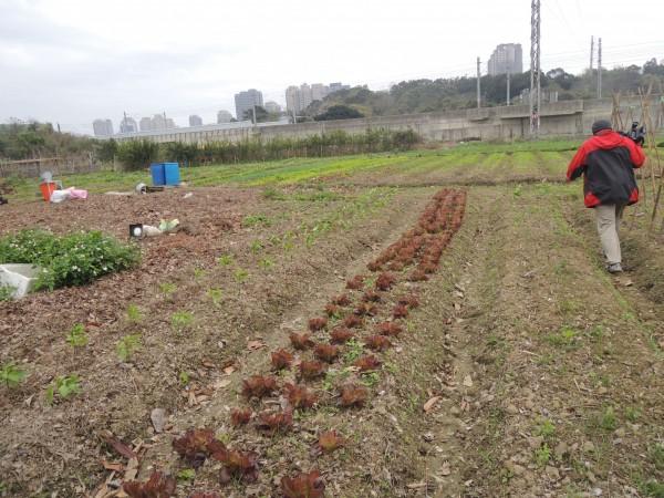 以竹市千甲農場做為合作的對象,期許讓土壤活化。(記者洪美秀翻攝)