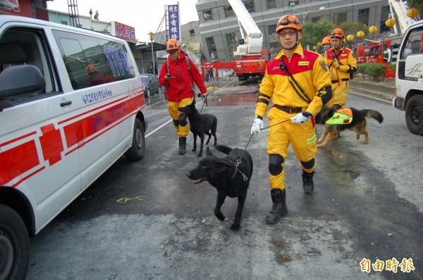 搜救人員出動搜救犬,希望找到生還者。(記者楊金城攝)