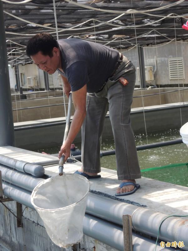 蔡永常表示不當鄉長要回家養魚、當農民。(記者廖淑玲攝)