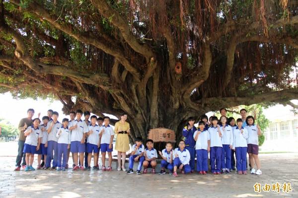三條國小校樹「百榕」,是師生成長的的共同回憶。(記者陳冠備攝)