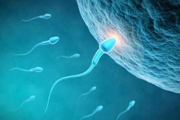 根據最新研究,男性只要1週運動3次,也許能改善精子的品質與數量。(法新社)
