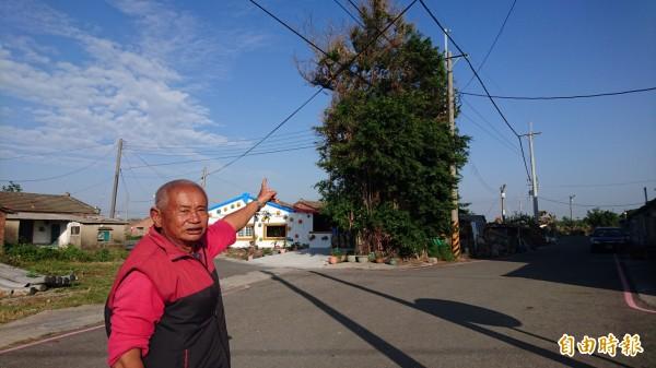 泰安宮廟公王州成說,榕樹長到阻礙電線,為了安全須剪樹。(記者楊金城攝)