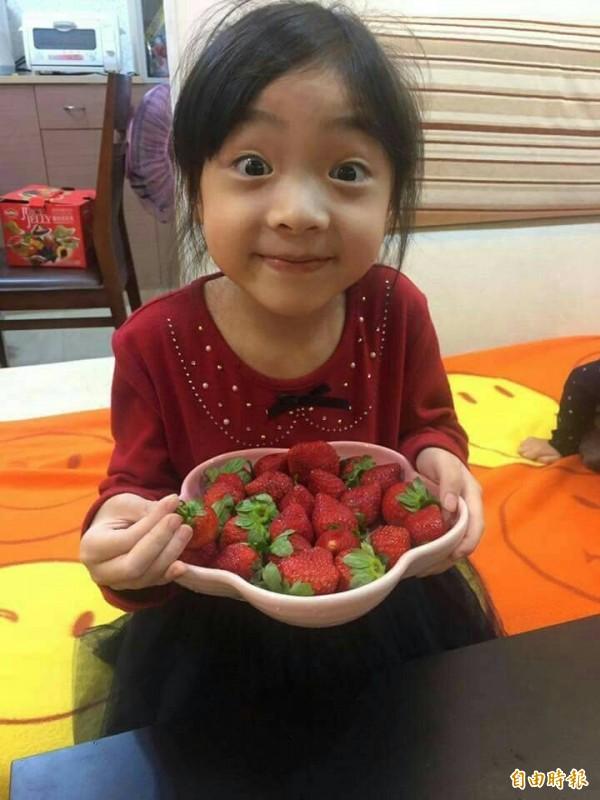 高市草莓產地價每斤最高450元。(記者陳文嬋攝)