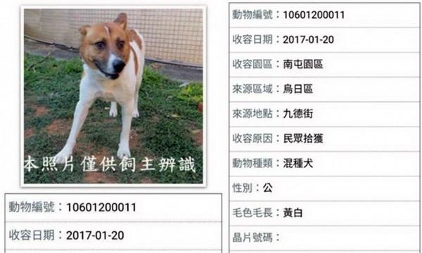 這隻流浪犬已遭安樂死。(台灣動物緊急救援小組提供)