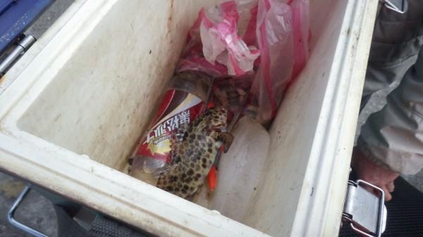 海巡人員在劉翁的冰箱內找到一尾蜂巢石斑魚。(記者吳昇儒翻攝)