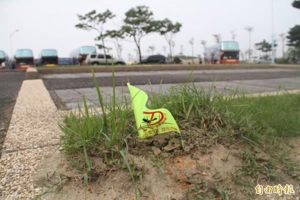 八里文化公園停車場驚見紅火蟻蹤跡,高灘處已插警示旗並投藥。(記者葉冠妤攝)