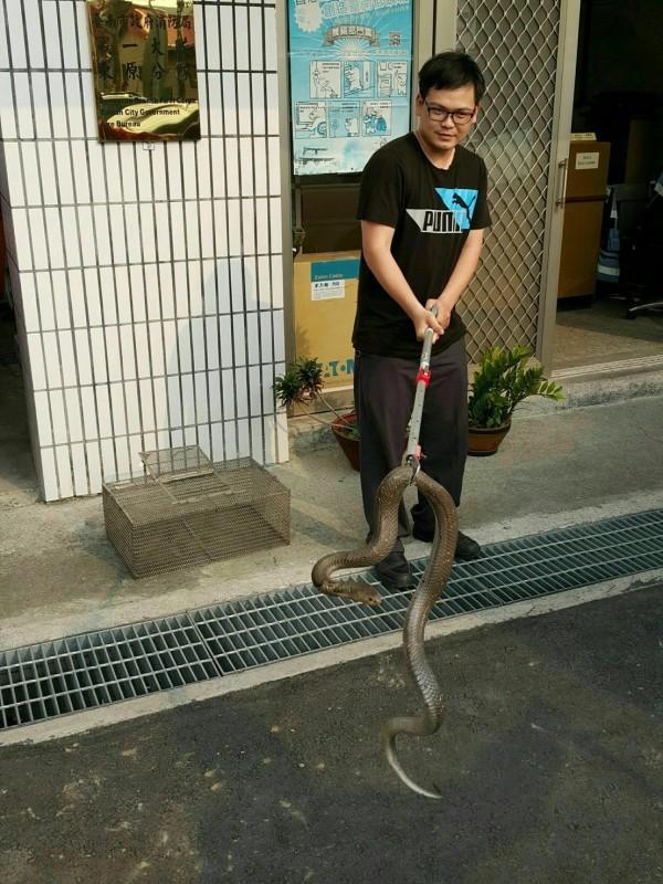 南市消防局東原分隊出示另張照片澄清表示,眼鏡蛇狀似龐大是因拍攝角度問題,呼籲民眾不要恐慌。(記者王涵平翻攝)
