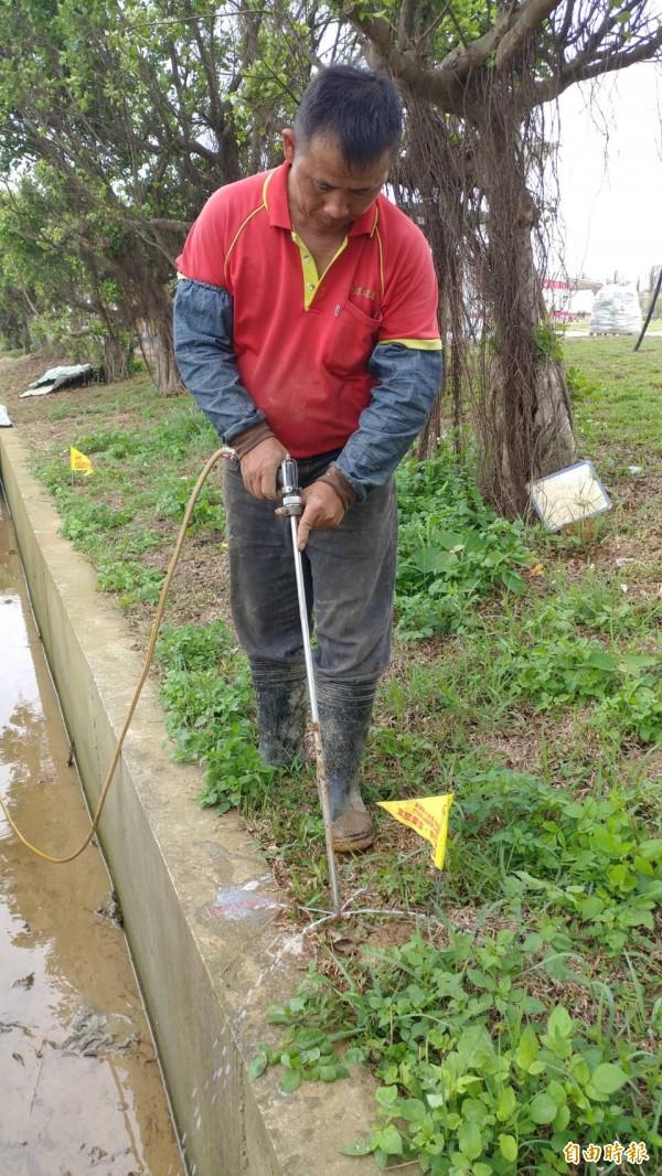 農業局僱工進行紅火蟻的投藥。(記者李容萍攝)