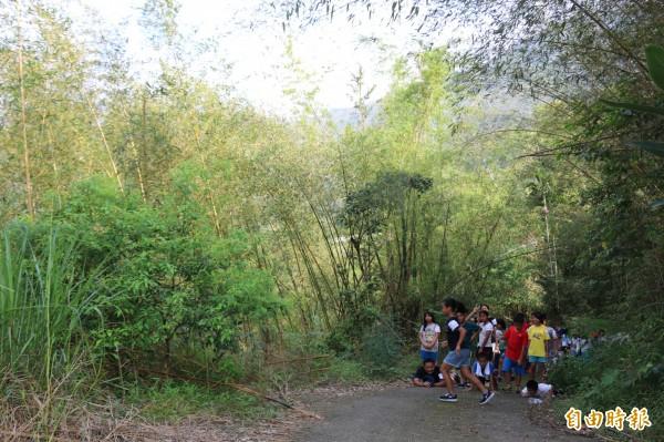 布農文教基金會28.5公頃的桂竹林獲FSC森林經營認證。(記者王秀亭攝)