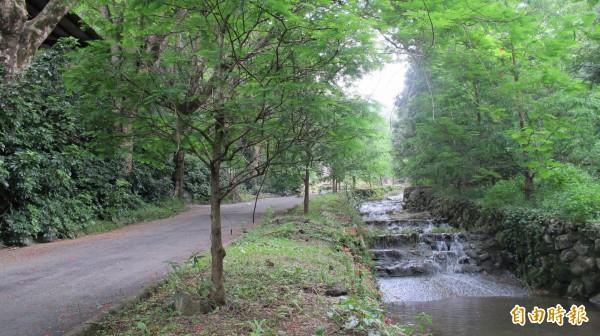 泰雅渡假村園區廣達56公頃,其中的野溪生態步道為賞螢熱區。(記者佟振國攝)