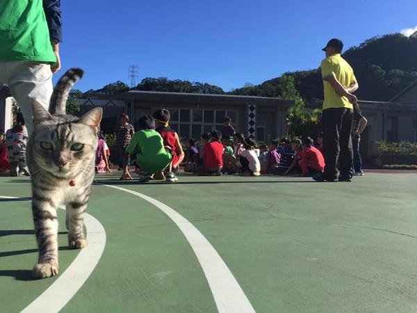 學童上室外課時,「比拉」也會跟前跟後,絲毫不放鬆。(萬豐國小提供)