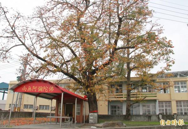百年木棉老樹被當地居民稱為「斑芝公」是潮洋社區的守護神。(記者陳冠備攝)