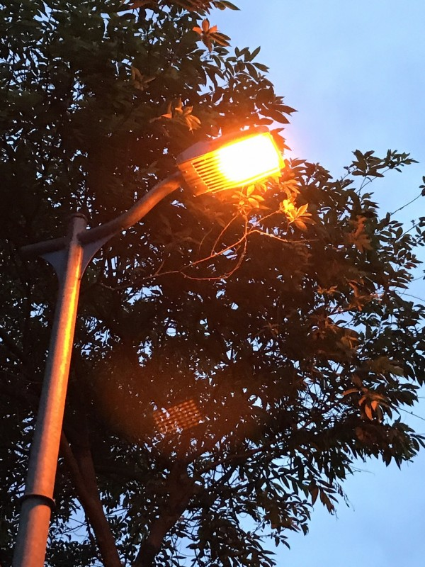 台北市大安森林公園加裝螢火蟲專用LED燈。 (圖由台北市公園路燈工程管理處提供)