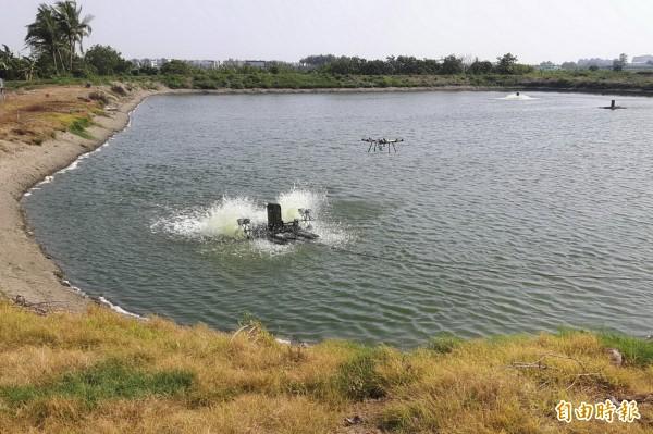 無人機飛到魚塭上空投料餵食。(記者蔡文居攝)
