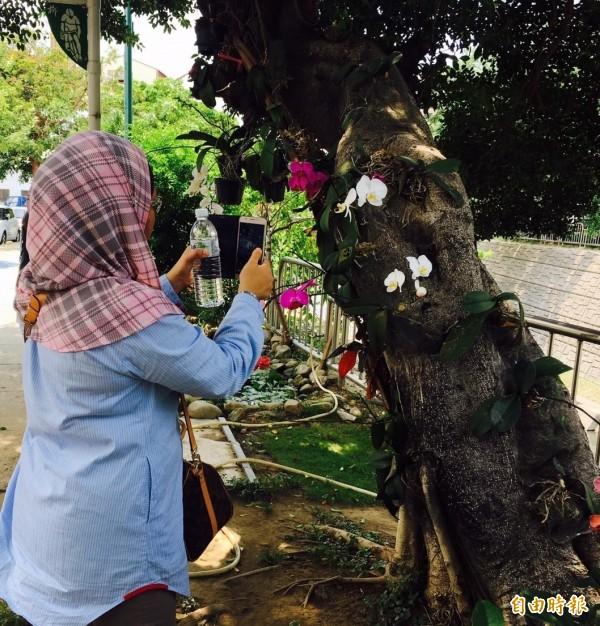 馬來西亞城市規劃師到台中北區錦平里觀摩低碳社區,看到蘭花在樹上很好奇。(記者蔡淑媛攝)