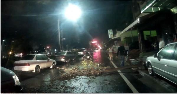 嘉義市世賢路一段今晚突有路樹倒塌,一名機車騎士因此摔倒受傷。(記者王善嬿翻攝)