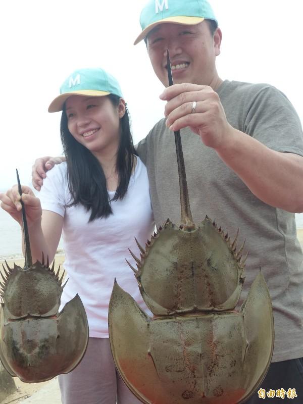 嫁至金門的香港媳婦與老公各拿著一隻又叫「夫妻魚」的雌雄鱟。(記者吳正庭攝)
