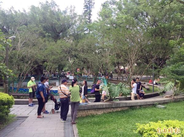 大溪中正公園要把相撲場建回來。(記者李容萍攝)