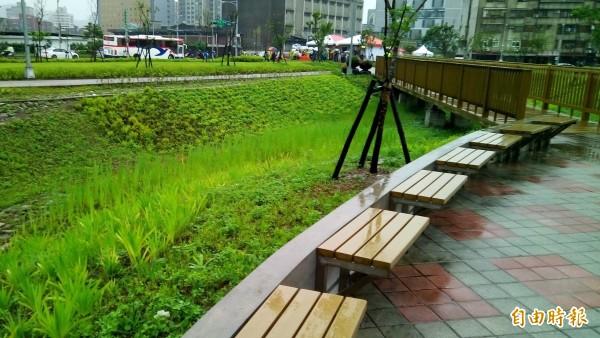 玉東公園引入「海綿城市」的概念,設有透水鋪面、草溝及雨水花園,可幫助雨水滲入地表。(記者黃建豪攝)