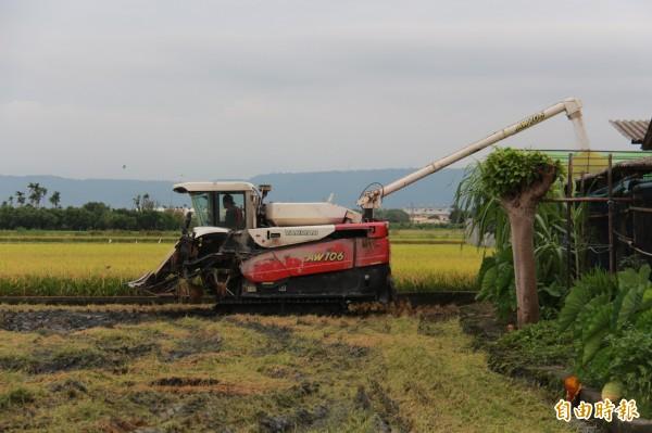 趁天一放晴,收割機業者收稻作業忙不停。(記者陳冠備攝)