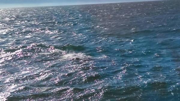 東港小琉球海域發現鯨魚浮出水面。(取自小琉球聯盟臉書)