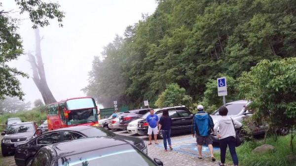 玉山國家公園塔塔加夫妻樹中的「夫樹」倒塌後,今決議將殘體展示,日後將只剩「妻樹」孤單佇立的身影。(記者謝介裕翻攝)