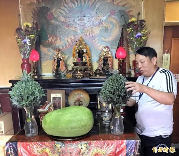 南投「微光森林」董事長陳寶麟將如西瓜大的「繡球鳳梨花」置放在玄天上帝祠堂供桌供人觀賞。(記者謝介裕攝)