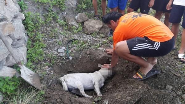 飼主痛心埋葬遭毒害的愛犬。(民眾提供)