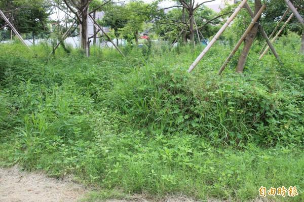 這是新竹縣的公16公園,因為欠缺管理,雜草叢生,有些地方人們根本已經無法走進去,被抨擊是全竹北最醜的公園。(記者黃美珠攝)