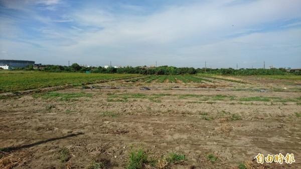 沙崙產業園區預定地約有28公頃。(記者陳昀攝)