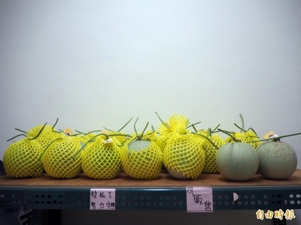 邱顯朝採購哈密瓜後,會放在倉庫分類,確定夠甜、夠軟才會販售。(記者陳昀攝)