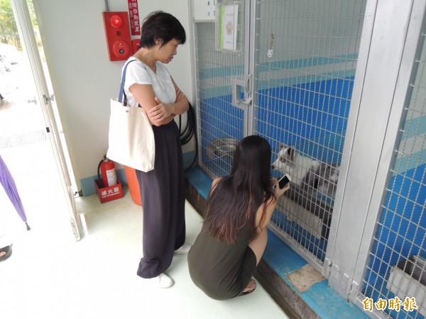 苗栗縣生態保育教育中心啟用,不少民眾參觀犬舍、逗弄犬隻,準備認養。(記者張勳騰攝)