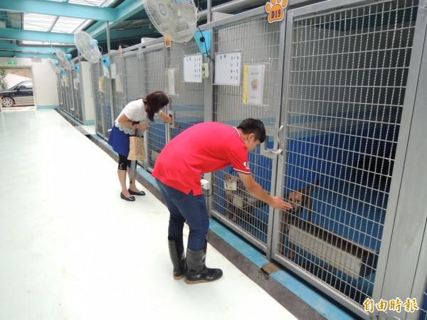 苗栗縣生態保育教育中心內的犬舍收容不少流浪犬,受到專業照顧。(記者張勳騰攝)