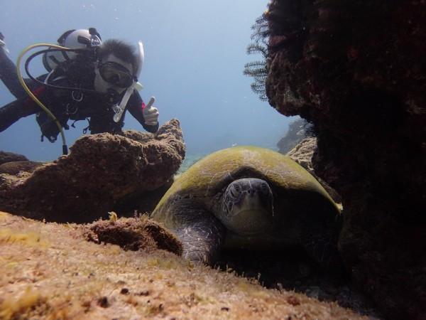 小琉球浮潛、潛水賞龜人口大增。(記者陳彥廷翻攝)