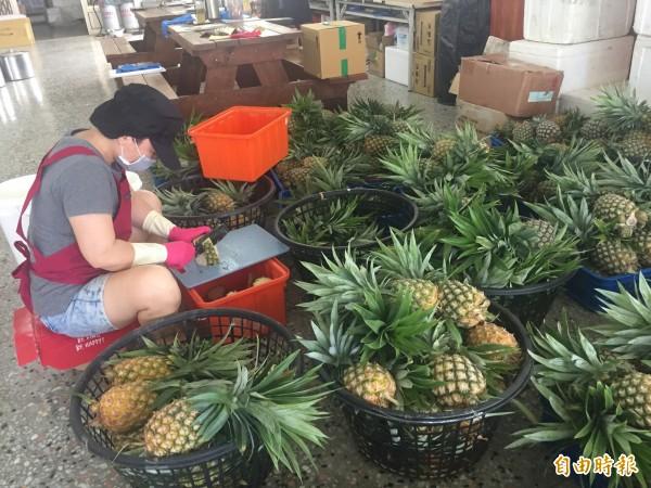台東土鳳梨滯銷,農會產銷班收購來製作冰棒。(記者張存薇攝)
