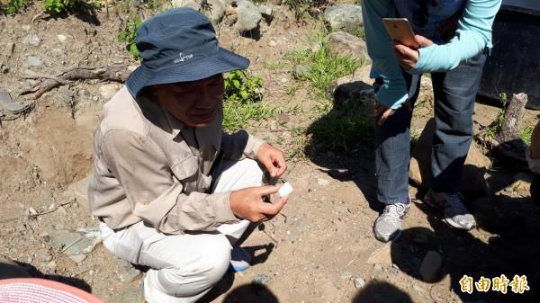 劉益昌在富山遺址地表隨地拾起石塊,說:「這是變質的台灣默玉」。(記者黃明堂攝)