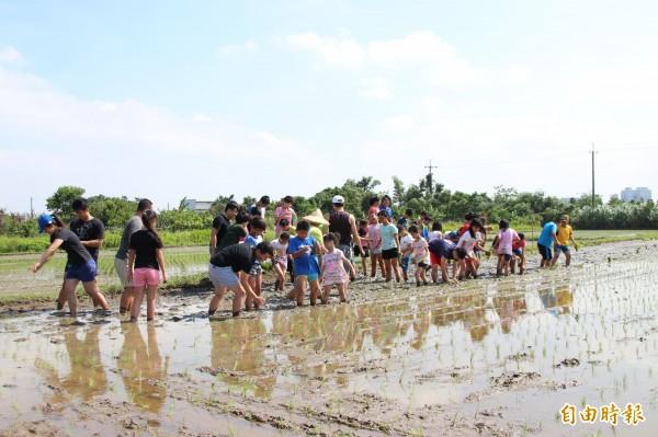 南興國小學生們到學校附近的農田裡,體驗插秧的樂趣。(記者周敏鴻攝)