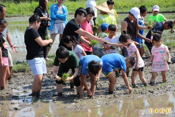 南興國小學生們今天實際到學校附近的農田插秧,體會農夫種稻的辛苦,未來一定會更珍惜「盤中飧」。(記者周敏鴻攝)