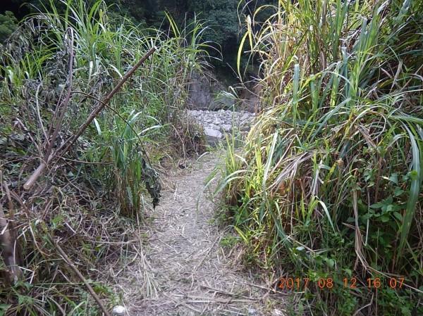 林男走小徑時不慎失足墜谷。(記者李忠憲翻攝)