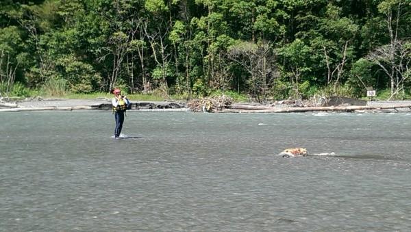 搜救人員在河床上找到失蹤第6天的吳姓男子遺體。(記者李忠憲翻攝)