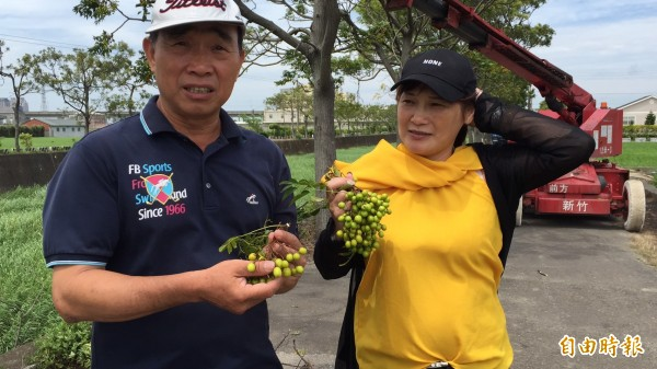 新竹縣新埔鎮長林保祿(左)說,他跟代表會主席王張碧冬(右)手上的苦楝子,是最天然的除蟲劑。(記者黃美珠攝)
