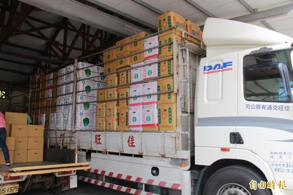 埤頭供銷市場供貨量大增,大卡車上塞滿包心白菜準備出貨。(記者陳冠備攝)