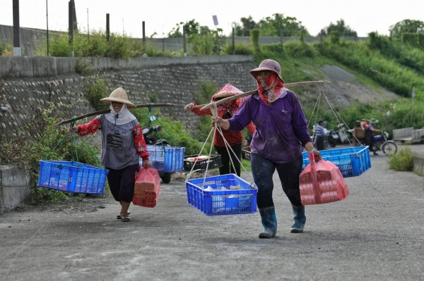台西村民每到農曆7月16日,就會挑著吊籃裝供品,到濁水溪河床拜「溪王」(圖:許震唐提供)