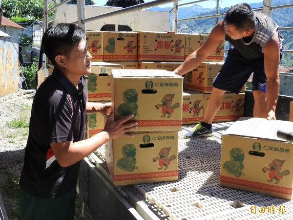 颱風來襲前仁愛鄉農會共同運銷量大增,農會也加派人力協助農民輸運。(記者佟振國攝)