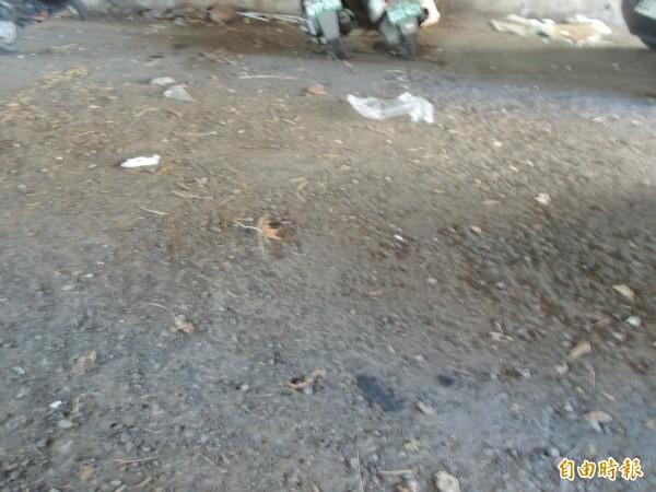 竹北市自強南路的經國橋下,宛如免費大型停車場,也有運輸業者利用橋下空地裝卸貨,但民眾抱怨常遭亂丟垃圾,影響市容觀瞻。(記者廖雪茹攝)