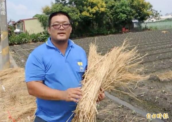 青農魏見任表示,乾稻草能隔熱防雨,益處很多。(記者陳冠備攝)
