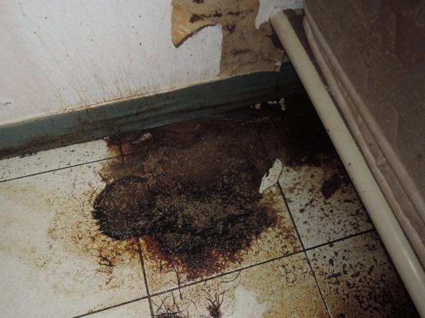 基隆市動物保護防疫所今天接獲愛貓人士通報,在七堵區明德一路1間民宅發現14隻貓屍,陳屍已久布滿蛆蟲,甚至只剩白骨及皮毛。(基隆市動物保護防疫所提供)