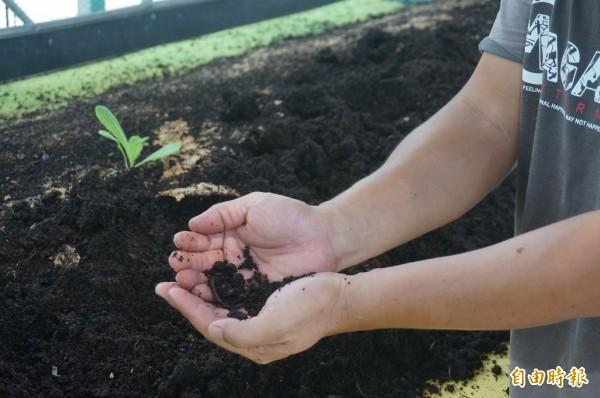 蚯蚓肥成本低,富含葉菜類所需的生長原素。(記者黃文瑜攝)