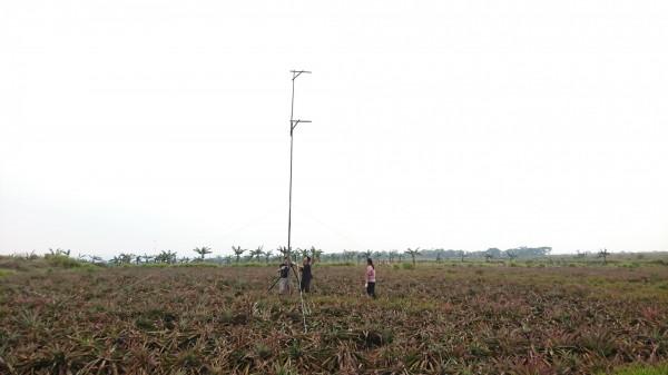 屏科大鳥類研究室在內埔鄉鳳梨田中豎起棲架。(屏科大鳥類研究室提供)