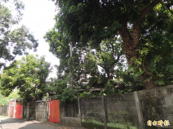竹東林場的日式木造宿舍群,約有80年歷史,現址保留24棟;新竹縣政府文化局已爭取客委會補助,辦理調查規劃,擬朝林業生活園區的方向發展。(記者廖雪茹攝)
